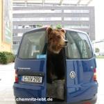 Bäriges aus Chemnitz