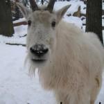 Tierpark im Winter